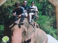 הפיל הכתום