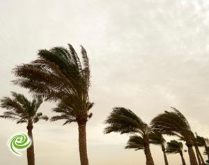 הסערה – עדכונים ודיווחים שוטפים