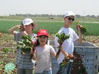 """קטיף ירקות חוויתי למען נזקקים בחוה""""מ פסח"""