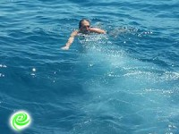 אלי מוזיקנסקי בלב ים…
