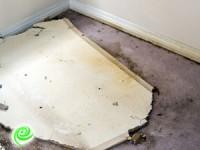 פתרונות מקצועיים לייבוש הצפות ושיקום נזקים בשטיחים ובספות