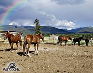 אילו אטרקציות אפשר למצוא בחוות סוסים?