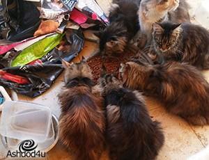 21 חתולים, 3 כלבים וסוס ניצלו בימים האחרונים