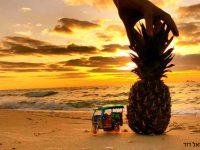חופים, הם לפעמים… סיבה לגאווה