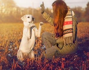 אז למה אילוף הכלבים פשוט לא מצליח לכם?