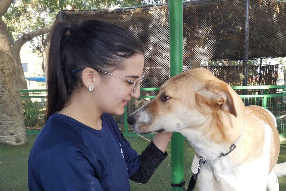 מבצע אימוץ כלבים בפארק לכיש – אפשר עוד להספיק