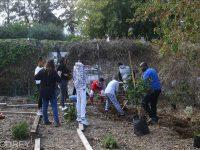 """אירוע הנטיעות הראשון של יער המאכל בכפר הילדים והנוער """"נווה גלים"""""""