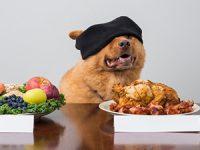 האם האוכל שאנחנו אוכלים מתאים גם לכלבים?