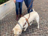 יום הכלב הבין, לאומי, פרויקט חיסון כלבים באשדוד