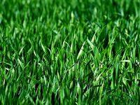 כיצד לשמור על דשא סינטטי ירוק ואיכותי