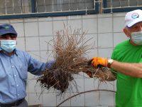 גמלאי 'אדמה אגן' חזרו לטפח את הגינה הקהילתית ולשאוף אוויר
