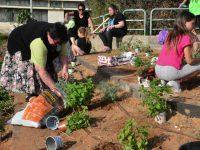הגינה ה-16 באשדוד