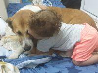 חיות מחמד – הוראות לשעת חירום